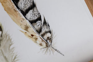 step by step drawing Feather drawing Uni Pin Ella Johnston