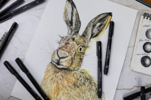 Hare artwork, uni-pin pens Illustration by Ella Johnston