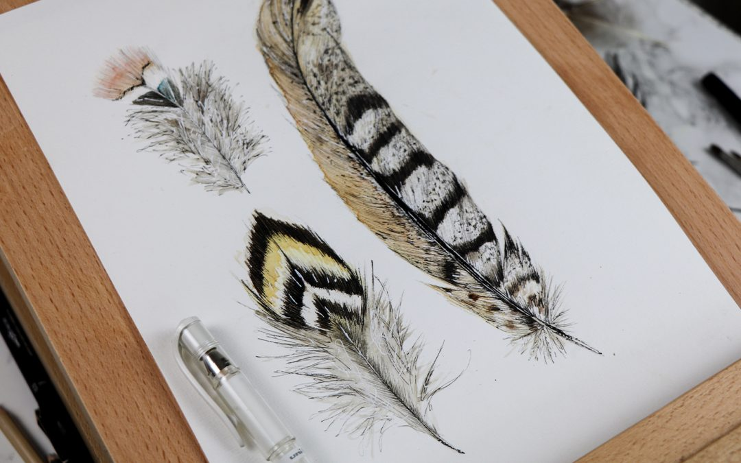 Watercolour and ink feathers art work step by step
