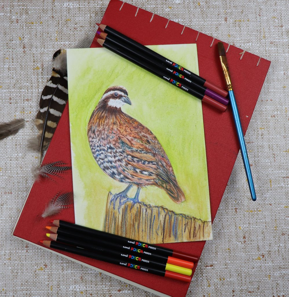 Work with POSCA pencils
