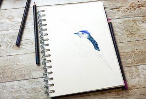 Create tonal drawings with POSCA pencil